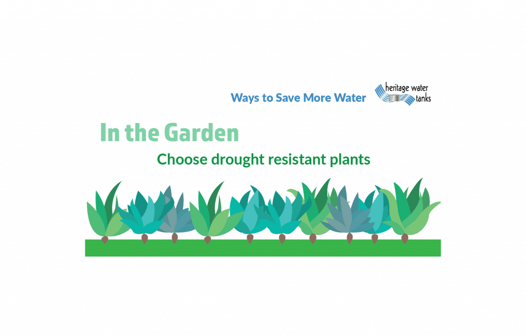 In the garden - Choose drought resistant plants